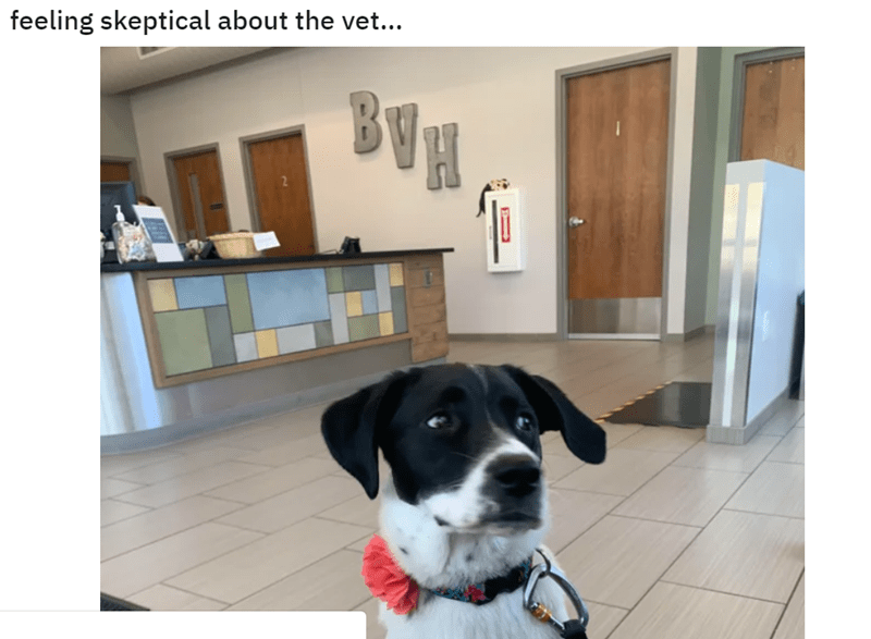 Dog - feeling skeptical about the vet... BUH
