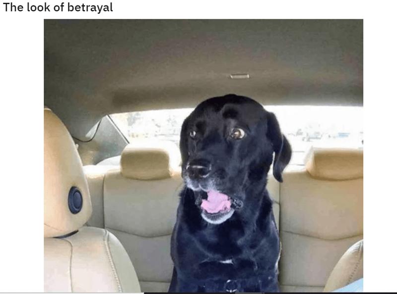 Dog - The look of betrayal