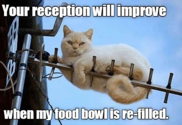 your reception will improve when my food bowl is re-filled pic of white cat looking grumpy while wrapped around an antenna