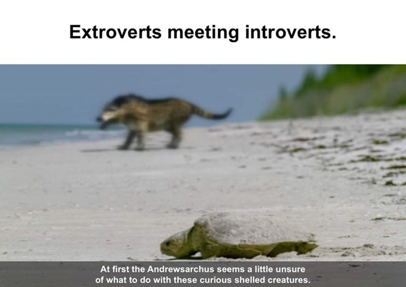 Wildlife - Extroverts meeting introverts. At first the Andrewsarchus seems a little unsure of what to do with these curious shelled creatures.