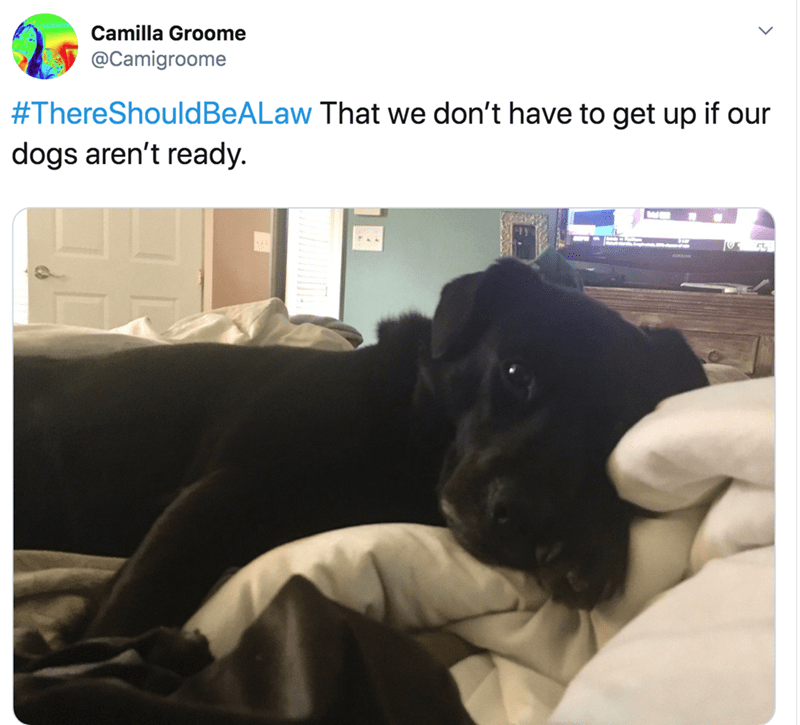 Black - Camilla Groome @Camigroome #ThereShouldBeALaw That we don't have to get up if our dogs aren't ready.