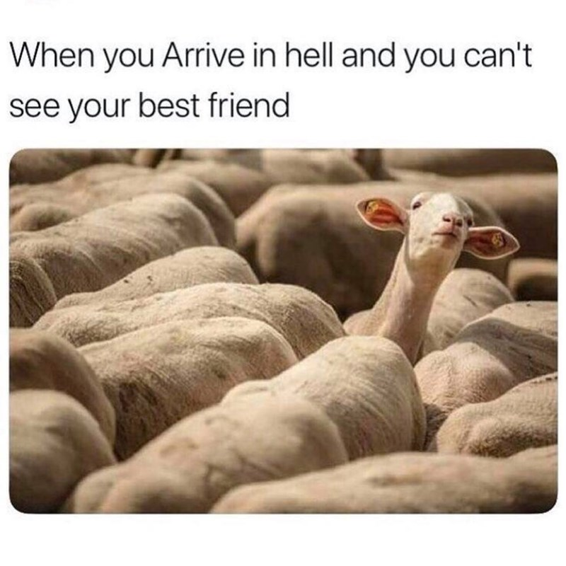 Adaptation - When you Arrive in hell and you can't see your best friend