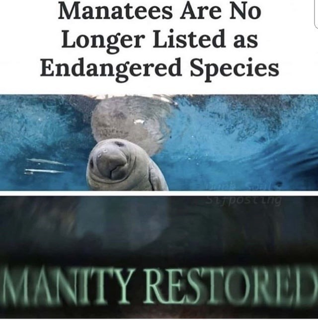 funny meme about manatees | manatees are no longer listed as endangered species manity restored