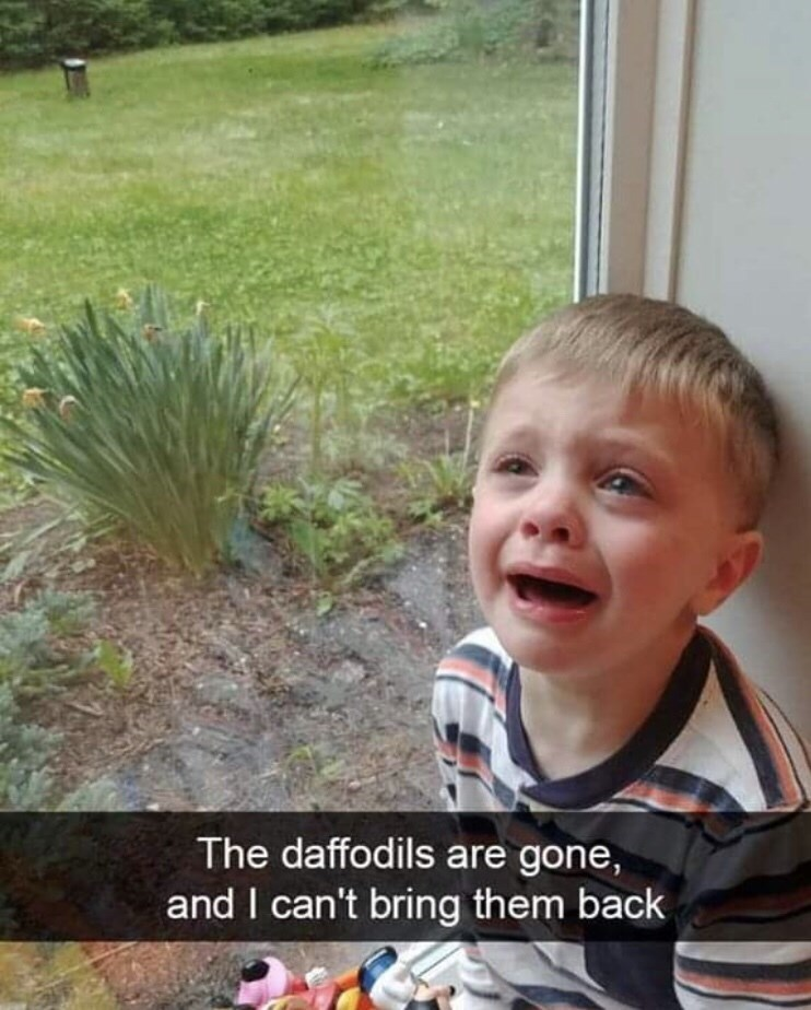 Facial expression - The daffodils are gone, and I can't bring them back
