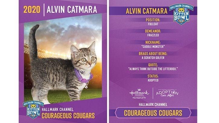 "Cat - ALVIN CATMARA KALLMARKCAANES KITTEN 2020 ALVIN CATMARA BOWL POSITION: FULLCAT DEMEANOR: FRAZZLED NICKNAME: ""CUDOLE MONSTER"" BRAGS ABOUT BEING: A SCRATCH GOLFER QUOTE: ""ALWAYS THINK OUTSIDE THE LITTERBOX."" STATUS: ADOPTEO CALLEARD c..... Hallmark ADOPTION Eer Alter CHANNEL The Hoart of TV RALLMARK CHANNEKS KITTEN HALLMARK CHANNEL BOWL COURAGEOUS COUGARS HALLMARK CHANNEL COURAGEOUS COUGARS"