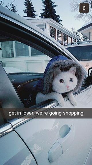 Vehicle door - get in loser, we're going shopping