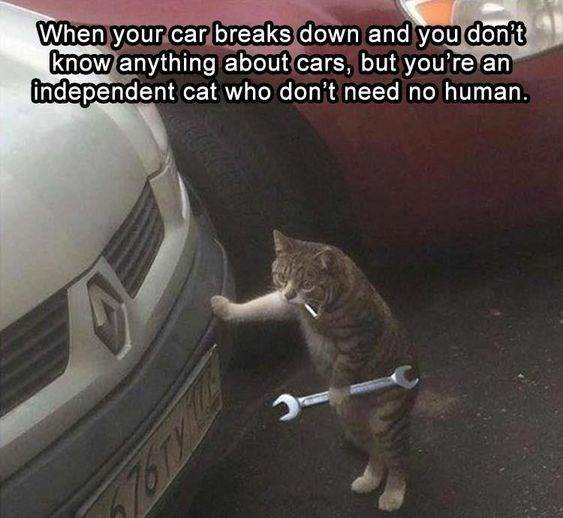 Cat - When your car breaks down and you don't know anything about cars, but you're an independent cat who don't need no human. 76Ty is