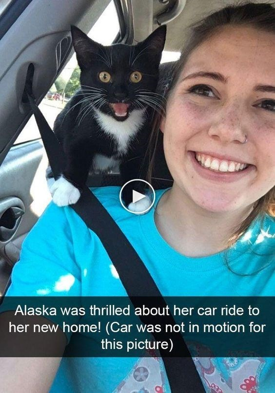 Cat - Alaska was thrilled about her car ride to her new home! (Car was not in motion for this picture)
