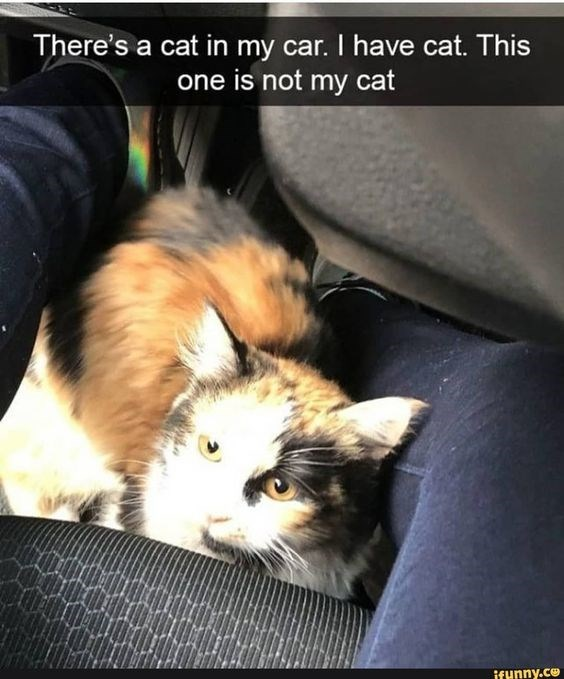 Cat - There's a cat in my car. I have cat. This one is not my cat ifunny.ce