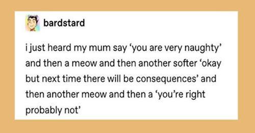 tumblr funny tumblr posts cute cats funny cats Cats animals - 9431045