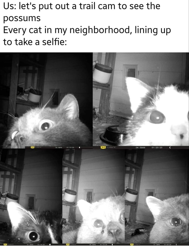 Rat - Us: let's put out a trail cam to see the sunssod Every cat in my neighborhood, lining up to take a selfie: DCHAWK 04:58AM 01/20/20 01/15/20 06:40PM