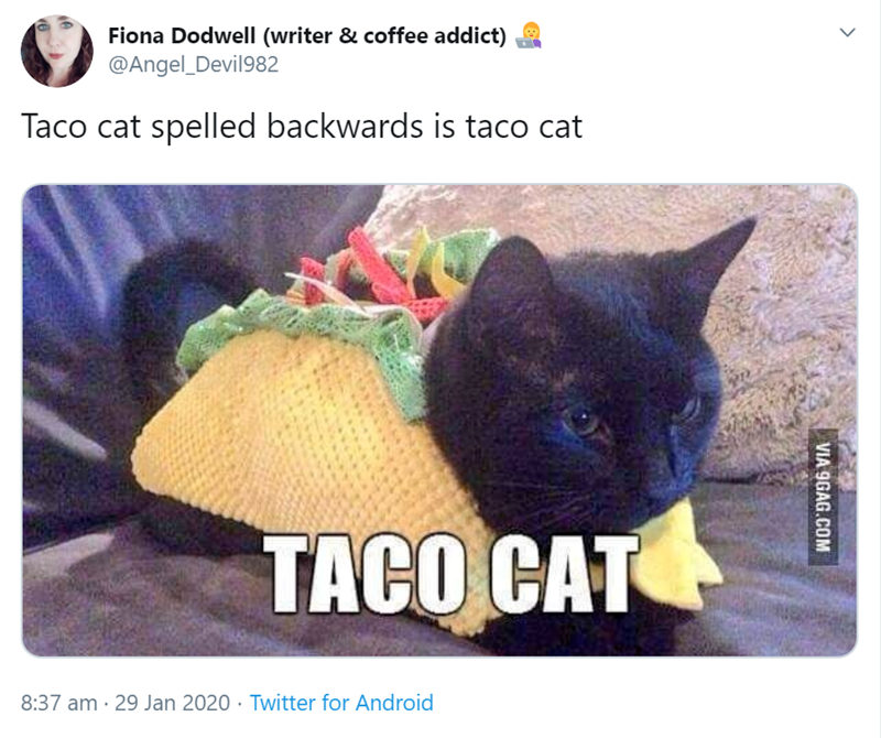 tweet by Angel_Devil982 Taco cat spelled backwards is taco cat TACO CAT pic of a black kitten wearing a knitted taco costume