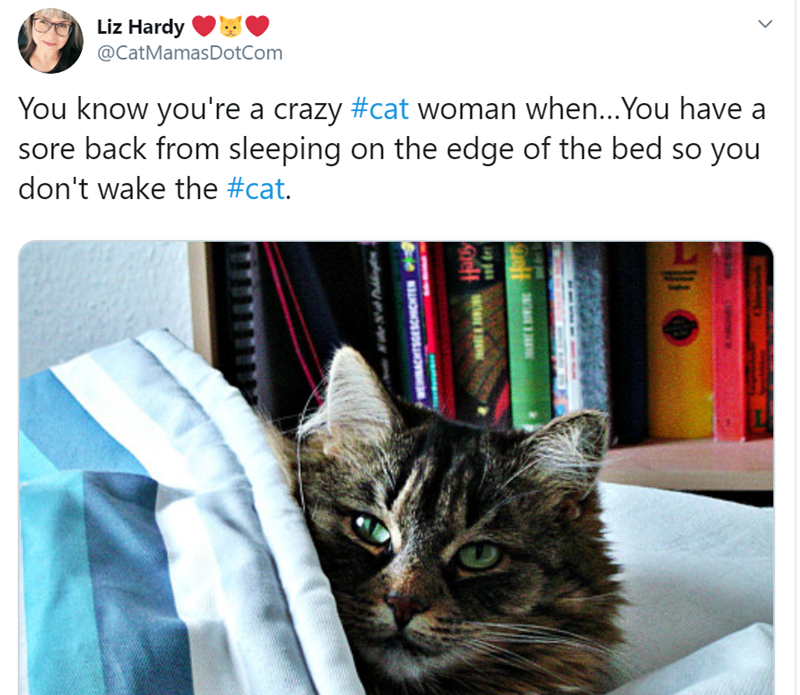 Cat - Liz Hardy @CatMamasDotCom You know you're a crazy #cat woman when...You have a sore back from sleeping on the edge of the bed so you don't wake the #cat.