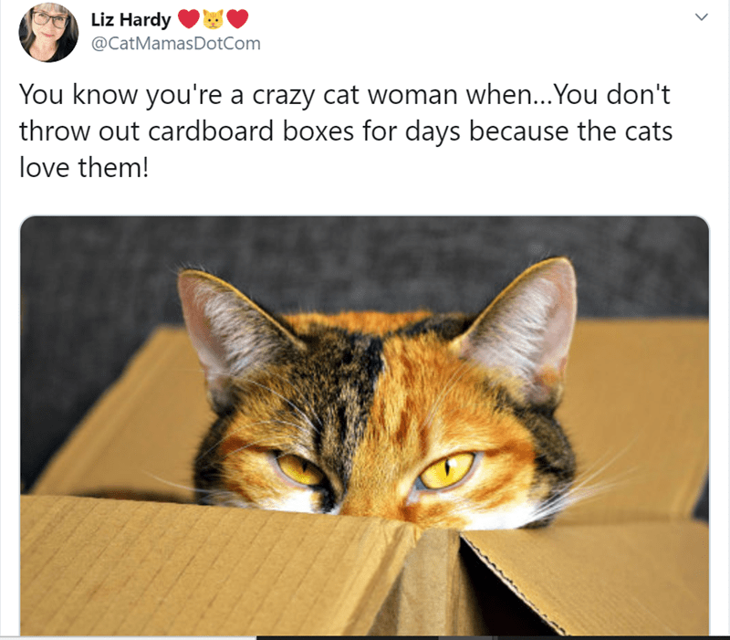 Cat - Liz Hardy @CatMamasDotCom You know you're a crazy cat woman when...You don't throw out cardboard boxes for days because the cats love them!