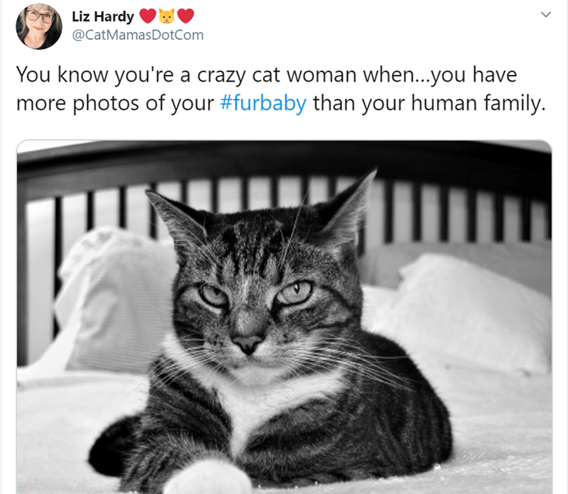 Cat - Liz Hardy @CatMamasDotCom You know you're a crazy cat woman when...you have more photos of your #furbaby than your human family.