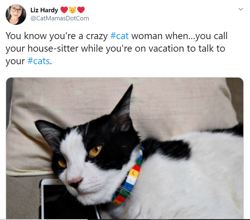 Cat - Liz Hardy @CatMamasDotCom You know you're a crazy #cat woman when..you call your house-sitter while you're on vacation to talk to your #cats.