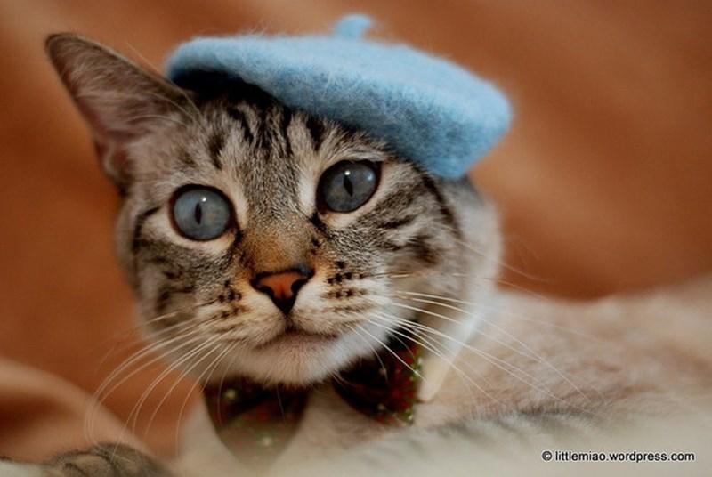 Cat - © littlemiao.wordpress.com
