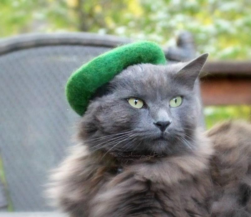 Cat - To
