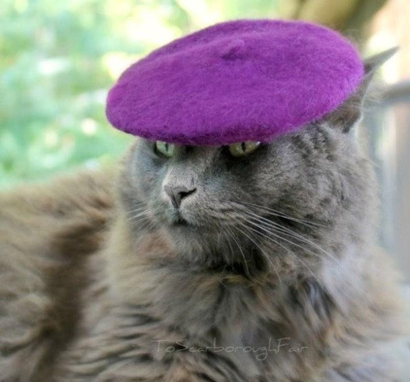 Cat - oraughtar