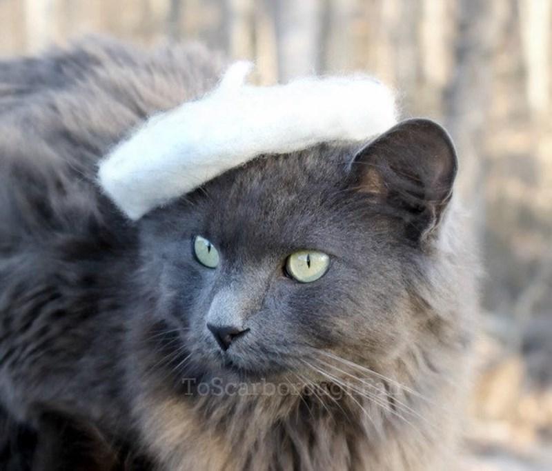Cat - ToScarboxog