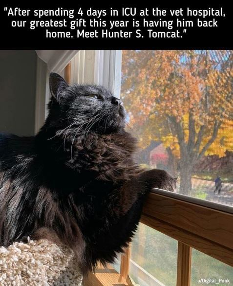 """Cat - """"After spending 4 days in ICU at the vet hospital, our greatest gift this year is having him back home. Meet Hunter S. Tomcat."""" u/Digital Punk"""