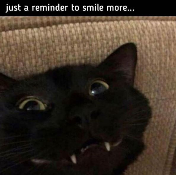 Cat - just a reminder to smile more...