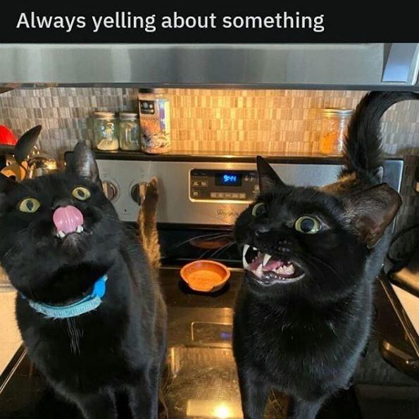 Cat - Always yelling about something ENHINM