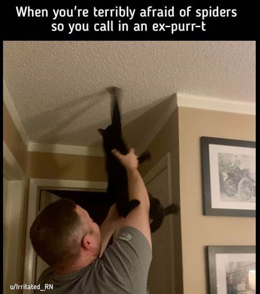 Ceiling - When you're terribly afraid of spiders so you call in an ex-purr-t u/Irritated_RN