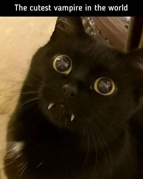 Cat - The cutest vampire in the world