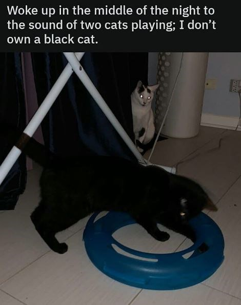 Cat - Woke up in the middle of the night to the sound of two cats playing; I don't own a black cat.