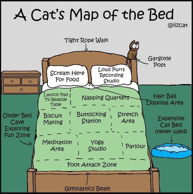 a cat's map of the bed @iizcat tight rope walk gargoyle post scream here for food loud purrs recording studio launch pad to bedside table napping quarters hair ball disposal area under bed cave exploring fun zone biscuit making buttlicking station stretch area expensive cat bed (never used) meditation area yoga studio parlour foot attack zone gymnastics beam