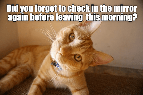 Cat - Did you forget to check in the mirror again before leaving this morning?