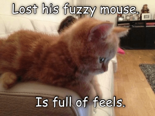 Cat - Lost his fuzzy mouse, Is full of feels,