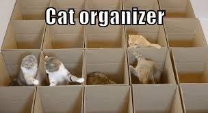 Cat - Cat organizer