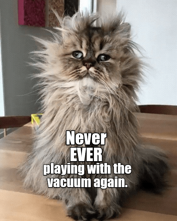 Cat - Never EVER playing with the vacuum again.