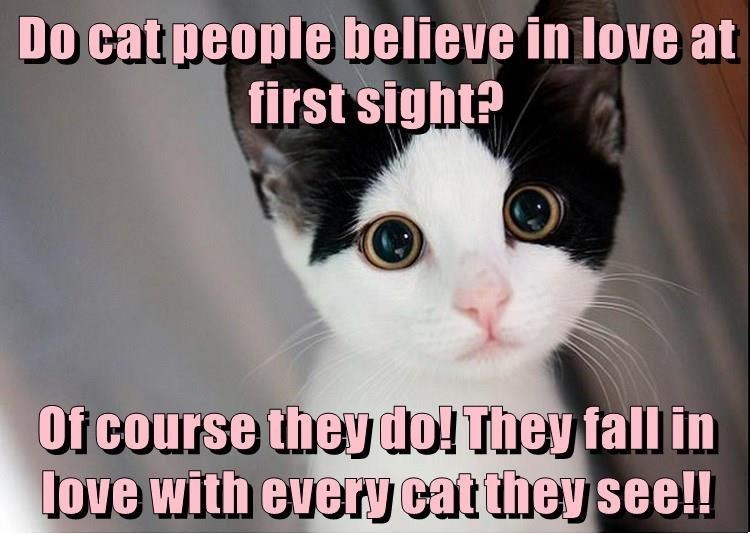 Cat - Do cat people believe in love at first sight? Of course they do! They fall in love with everN cat they see!!