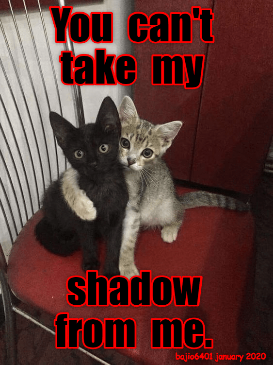 Cat - You can't take my shadow from me. bajio6401 january 2020