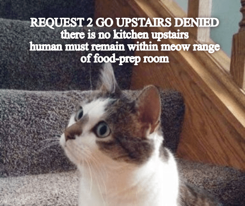 Cat - REQUEST 2 GO UPSTAIRS DENIED there is no kitchen upstairs human must remain within meow range of food-prep room