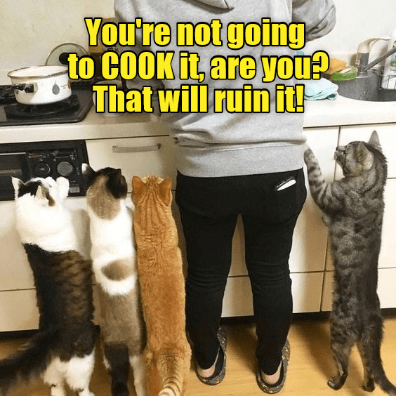 Cat - You're not going to COOK it, are you? That will ruin it!