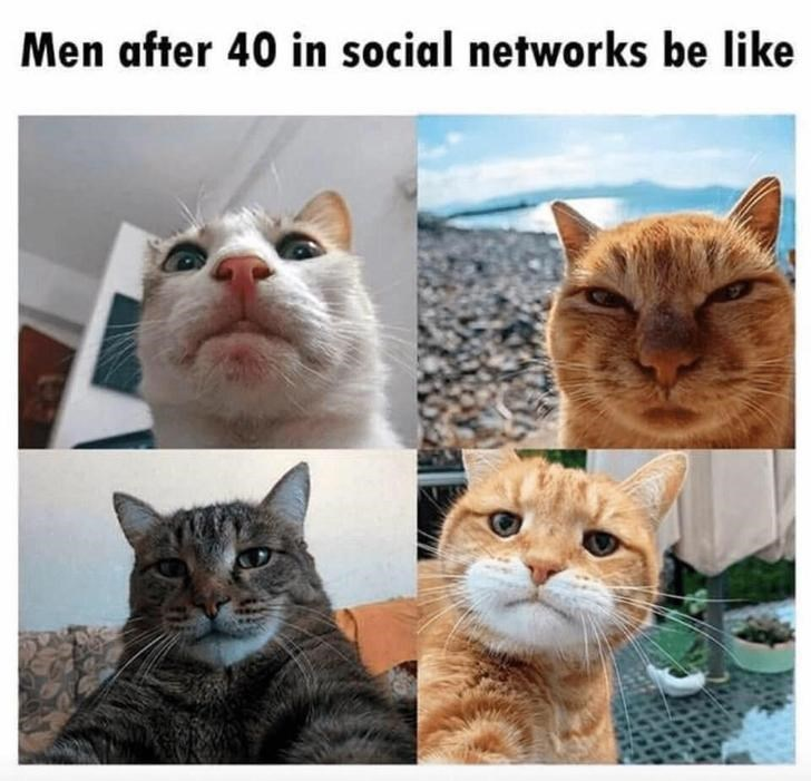 Text - Cat - Men after 40 in social networks be like
