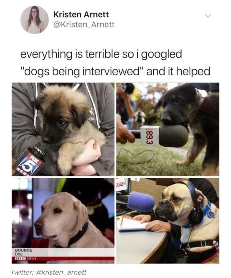 """Dog breed - Kristen Arnett @Kristen_Arnett everything is terrible so i googled """"dogs being interviewed"""" and it helped SPOC FOX NEWS BOUNCE Dog BBC NEWS Twitter: @kristen_arnett 89.3"""