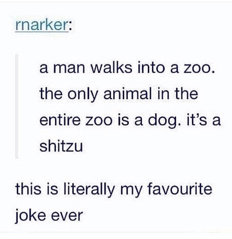 Text - rnarker: a man walks into a zoo. the only animal in the entire zoo is a dog. it's a shitzu this is literally my favourite joke ever