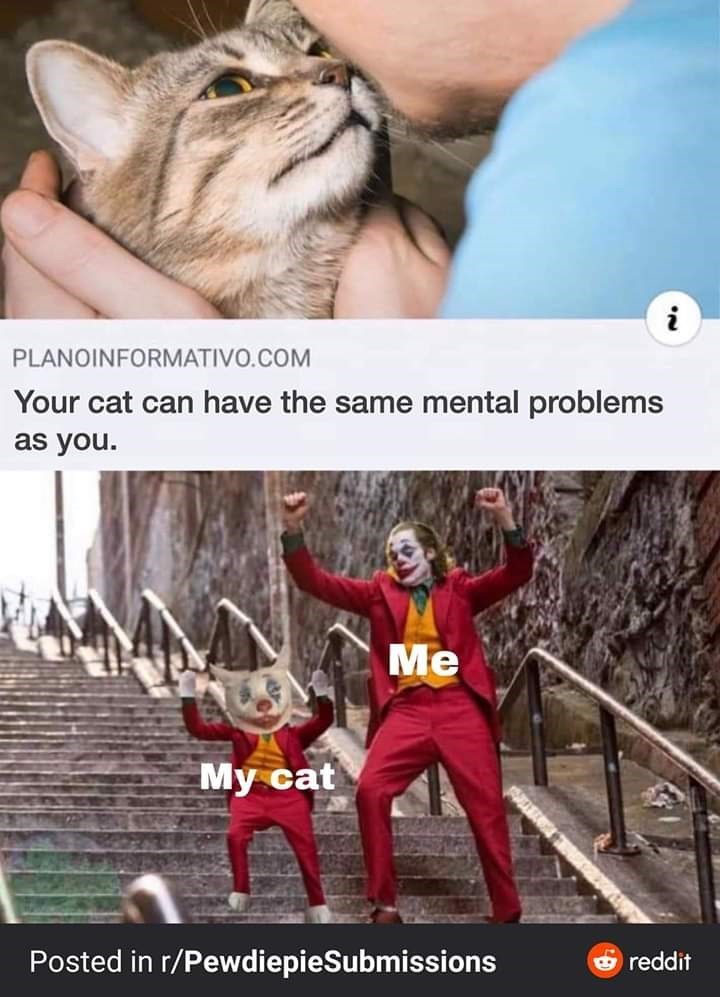Photo caption - PLANOINFORMATIVO.COM Your cat can have the same mental problems as you. Me My cat Posted in r/PewdiepieSubmissions O reddit