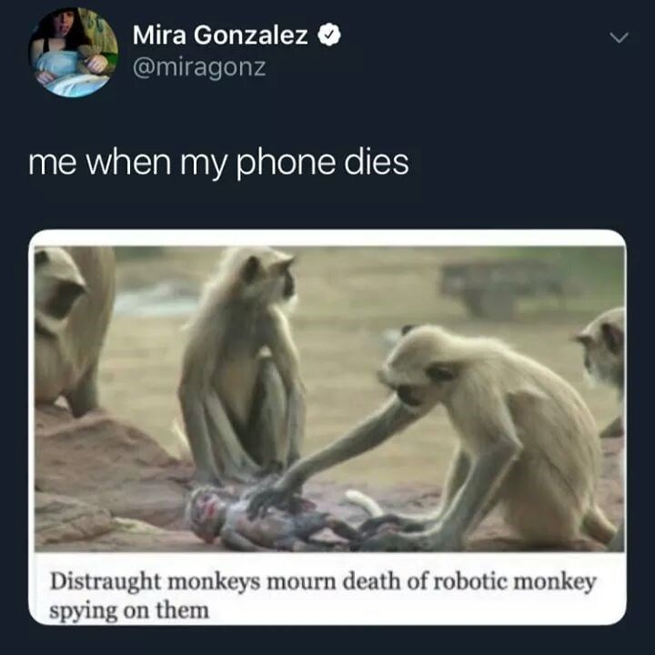 Adaptation - Mira Gonzalez @miragonz me when my phone dies Distraught monkeys mourn death of robotic monkey spying on them