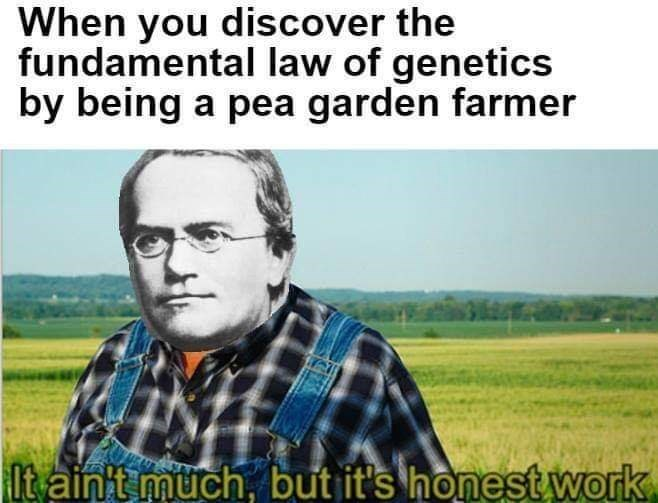 Text - When you discover the fundamental law of genetics by being a pea garden farmer It aint müch, but it's honest work