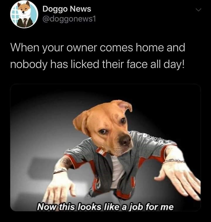 Dog - Doggo News @doggonews1 When your owner comes home and nobody has licked their face all day! DoggoNews Now this looks like a job for me