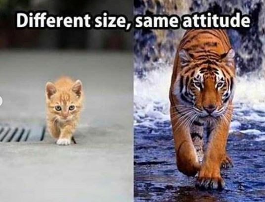 Mammal - Different size, same attitude
