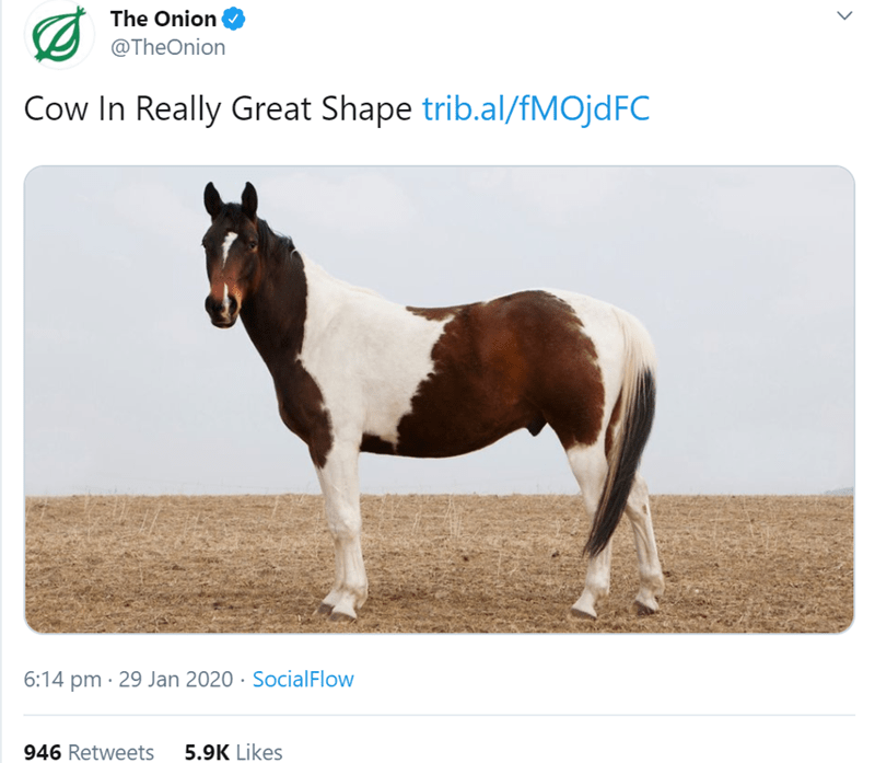 Mammal - The Onion @TheOnion Cow In Really Great Shape trib.al/fMOjdFC 6:14 pm · 29 Jan 2020 · SocialFlow 946 Retweets 5.9K Likes