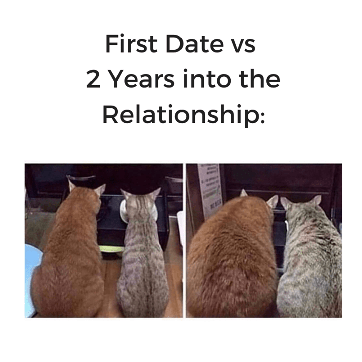 first date vs 2 years into the relationship: before and after pics of two skinny cats eating side by side then the same two cats but much bigger and chonkier