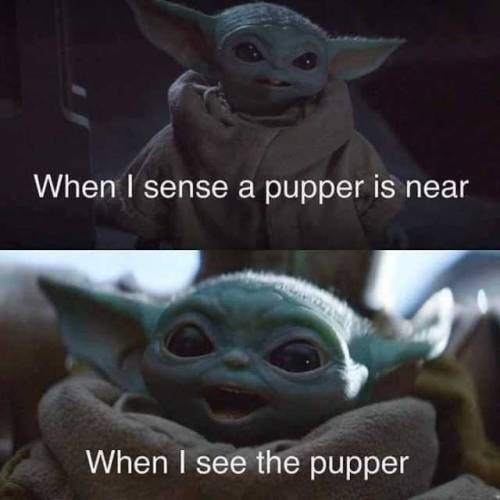 the mandalorian baby yoda dog lover meme when i sense a pupper is neat when i see the pupper